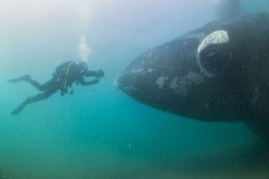 2-right-whale-photographer-close-up-hofman-linblad_74882_600x450