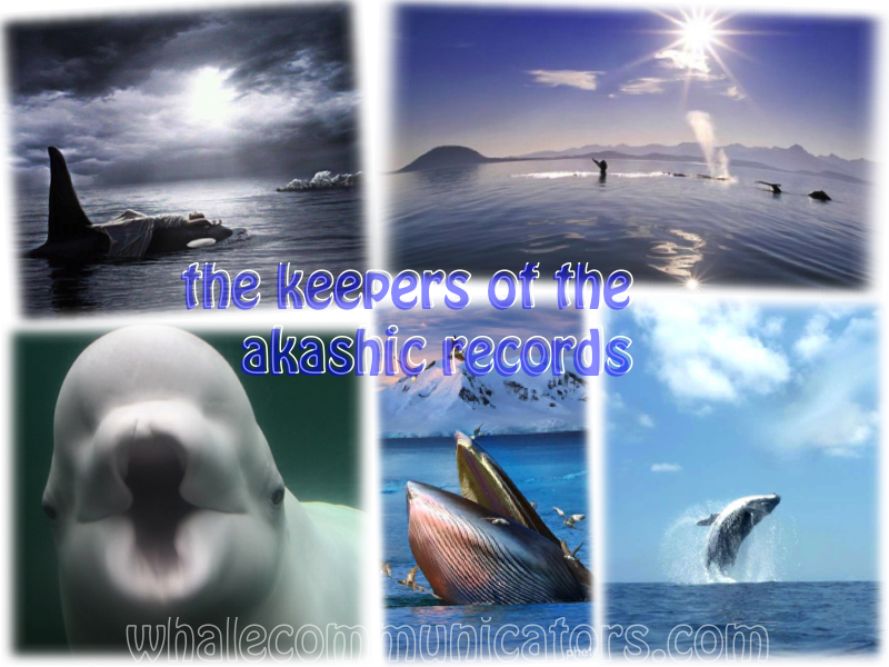 keepersoftheakashicrecords_whales